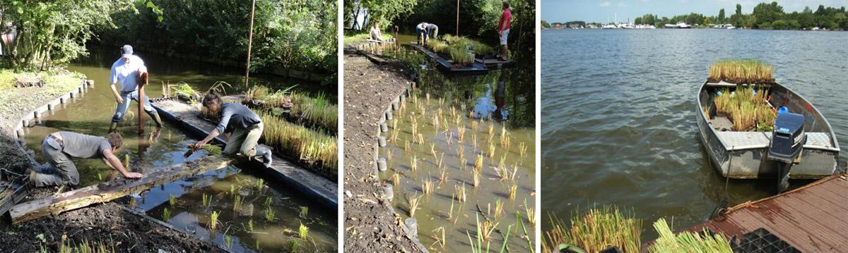 ontwerp en aanleg oeverbeplanting Westeinderplassen, HelkantPlant
