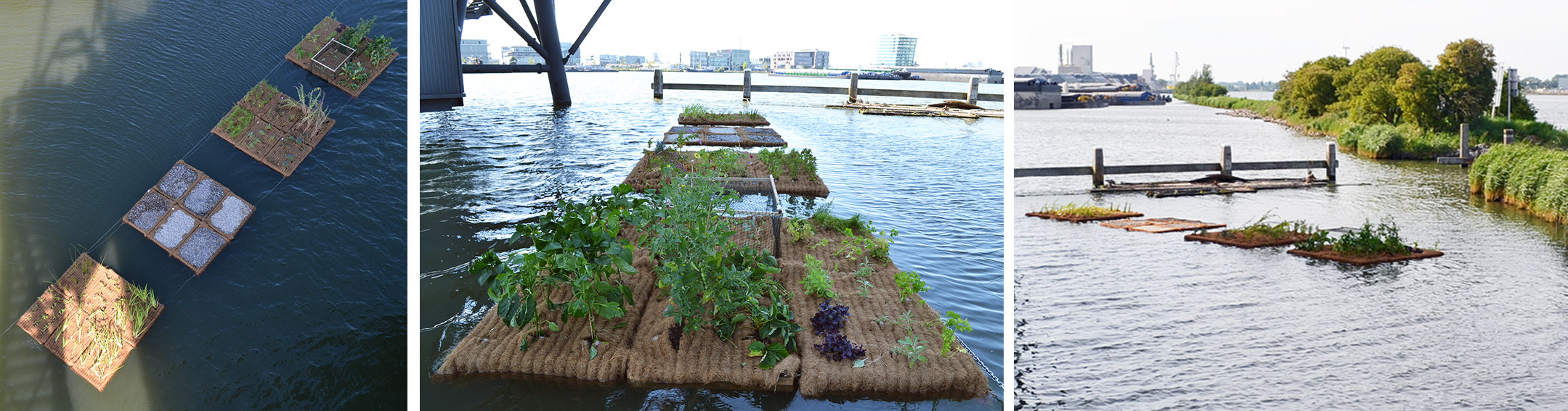 drijvende eilanden Amsterdam, Helkantplant