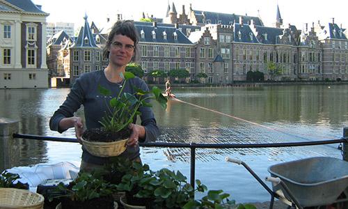 waterlelies Hofvijver