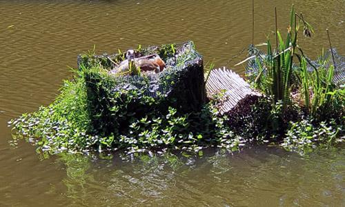 float met eendennest HelkantPlant