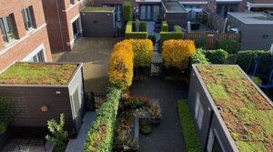 buurtinitiatief groene daken Geertruidenberg